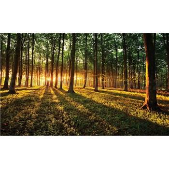 Fototapety les a západ slunce rozměr 368 cm x 254 cm
