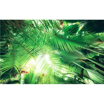 Vliesové fototapety Hefele palmový stín, rozměr 450 cm x 280 cm
