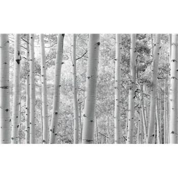 Vliesové fototapety Hefele břízy, rozměr 450 cm x 280 cm