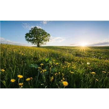 Vliesové fototapety Hefele jaro, rozměr 450 cm x 280 cm