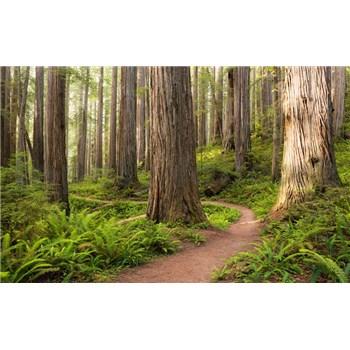 Vliesové fototapety Hefele červená stezka v lese, rozměr 450 cm x 280 cm