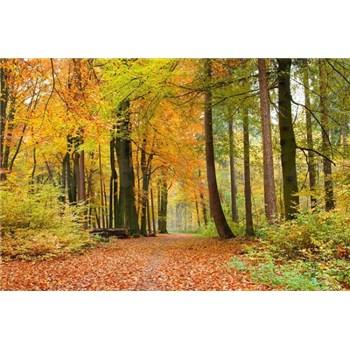 Vliesové fototapety les na podzim rozměr 375 cm x 250 cm