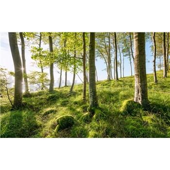 Vliesové fototapety Hefele magický bukový les, rozměr 450 cm x 280 cm