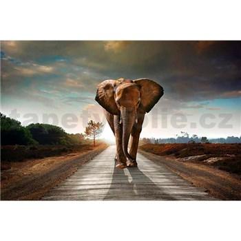 Vliesové fototapety slon rozměr 375 cm x 250 cm