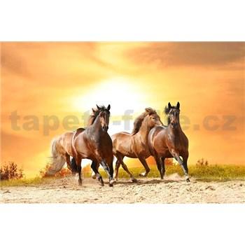 Vliesové fototapety koně při západu slunce rozměr 375 cm x 250 cm
