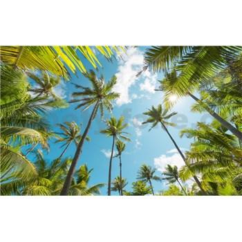 Vliesové fototapety Hefele kokosové nebe II, rozměr 450 cm x 280 cm