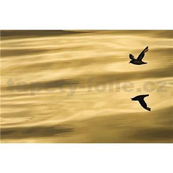 Fototapety National Geographic Reflection rozměr 184 cm x 127 cm