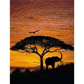 Fototapety Afrika rozměr 194 cm x 270 cm