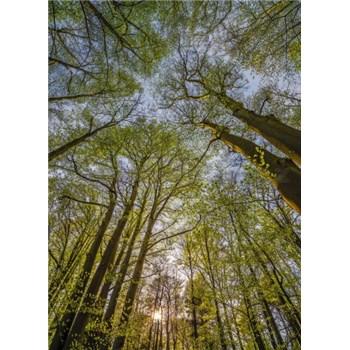 Fototapety koruny stromů rozměr 184 cm x 254 cm