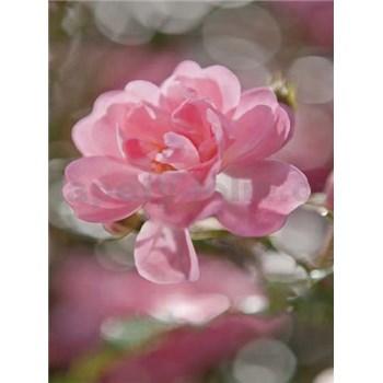 Fototapety růžové okvětí rozměr 184 cm x 254 cm