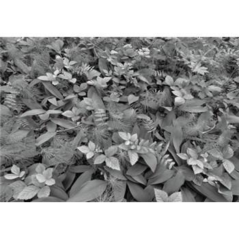 Fototapety lesní fauna rozměr 368 cm x 254 cm