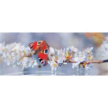 Vliesové fototapety motýl rozměr 250 cm x 104 cm