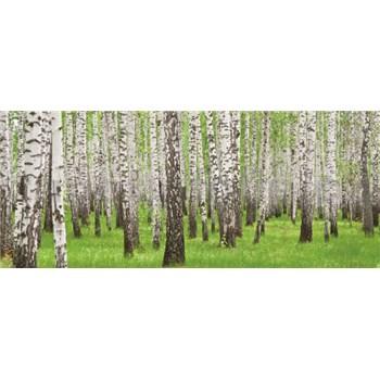 Vliesové fototapety břízy rozměr 250 cm x 104 cm