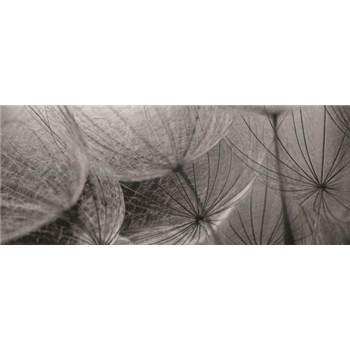 Vliesové fototapety bílé pampelišky rozměr 250 cm x 104 cm