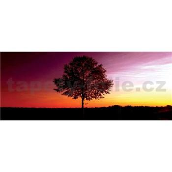 Vliesové fototapety strom rozměr 250 cm x 104 cm