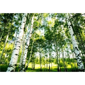 Fototapety sluneční svit v lese rozměr 366 cm x 254 cm - POSLEDNÍ KUSY