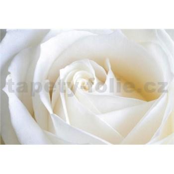 Vliesové fototapety bílá růže rozměr 312 cm x 219 cm
