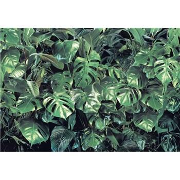 Fototapety zeleň rozměr 368 cm x 254 cm