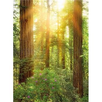 Vliesové fototapety les rozměr 184 cm x 248 cm