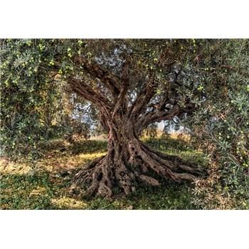 Fototapety Olivový strom rozměr 368 cm x 254 cm