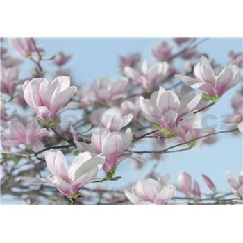 Fototapety magnolie rozměr 368 cm x 254 cm