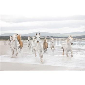 Fototapety koně rozměr 368 cm x 254 cm