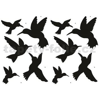 Samolepky na zeď - ptáci kolibřící 45 x 65 cm