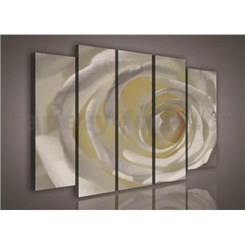 Obraz na plátně růže bílá 150 x 100 cm