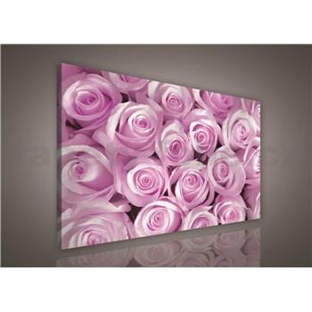 Obraz na plátně růžové růže 75 x 100 cm