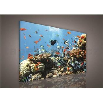 Obraz na plátně vodní svět 75 x 100 cm