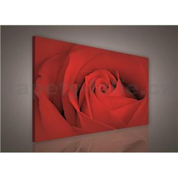Obraz na plátně červená růže 75 x 100 cm