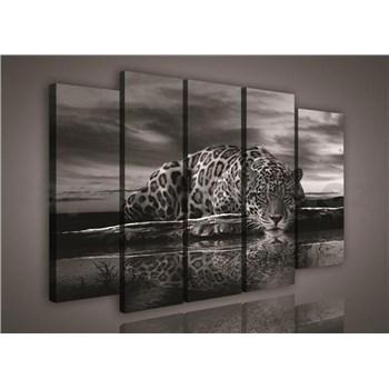 Obraz na plátně Jaguár 150 x 100 cm