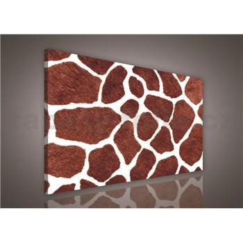 Obraz na plátně žirafí kůže 75 x 100 cm