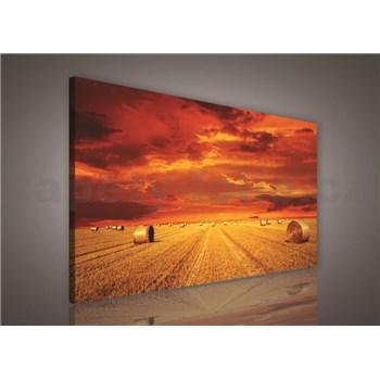 Obraz na plátně pole po žních 75 x 100 cm