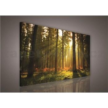 Obraz na plátně les s východem slunce 100 x 75 cm