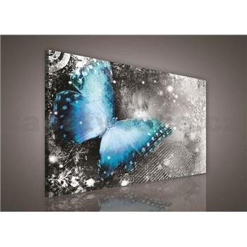 Obraz na plátně motýl 75 x 100 cm