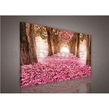 Obraz na plátně alej stromů 75 x 100 cm