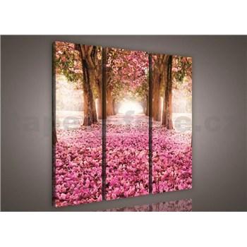 Obraz na plátně alej stromů 90 x 80 cm