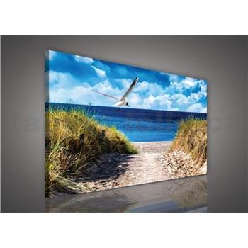 Obraz na plátně racek nad mořem 75 x 100 cm