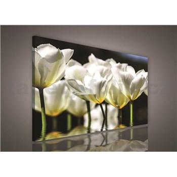 Obraz na plátně bílé květy 75 x 100 cm