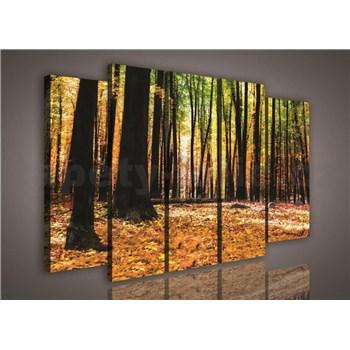 Obraz na plátně podzimní les 150 x 100 cm