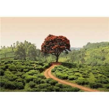 Fototapety červený strom na Srí Lance rozměr 368 cm x 254 cm - POSLEDNÍ KUSY