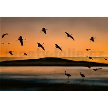 Fototapety ptáci při západu slunce rozměr 368 cm x 254 cm