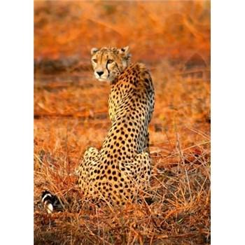 Vliesové fototapety leopard rozměr 184 x 254 cm