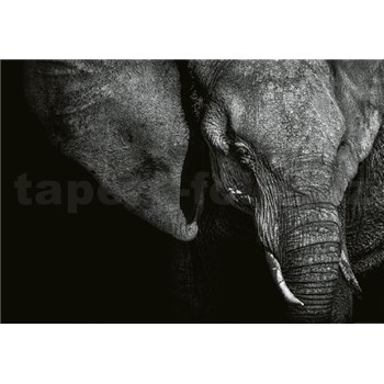 Fototapety krásný slon rozměr 368 cm x 254 cm