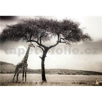 Vliesové fototapety žirafa rozměr 368 cm x 254 cm