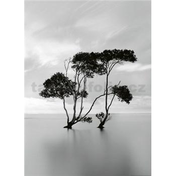 Vliesové fototapety stromy ve stojaté vodě rozměr 184 x 254 cm