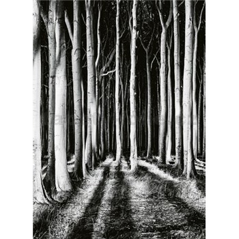 Fototapety tajemný les rozměr 184 cm x 254 cm