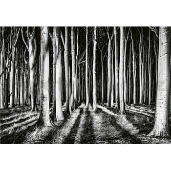 Vliesové fototapety tajemný les rozměr 368 cm x 254 cm