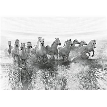 Vliesové fototapety bílé koně rozměr 368 cm x 254 cm